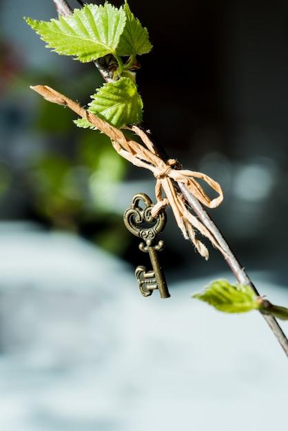 Nierenblätter eines birkenfrühlingsmakros auf einem schwarzen hintergrund. weinleseschlüssel, der an einer niederlassung hängt Premium Fotos