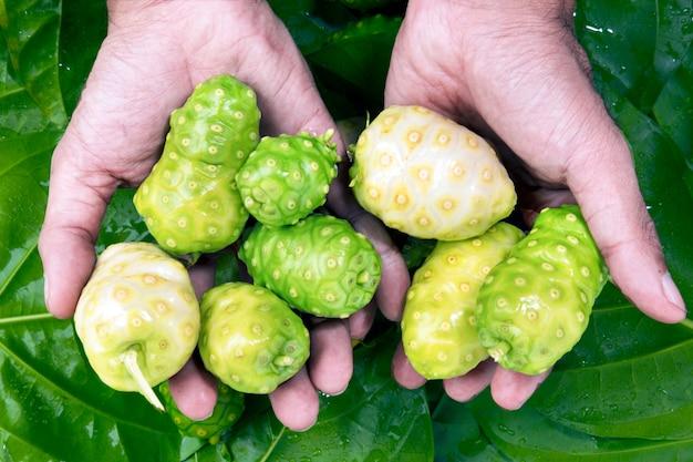 Noni indische maulbeerfrucht auf grünem blatthintergrund. Premium Fotos
