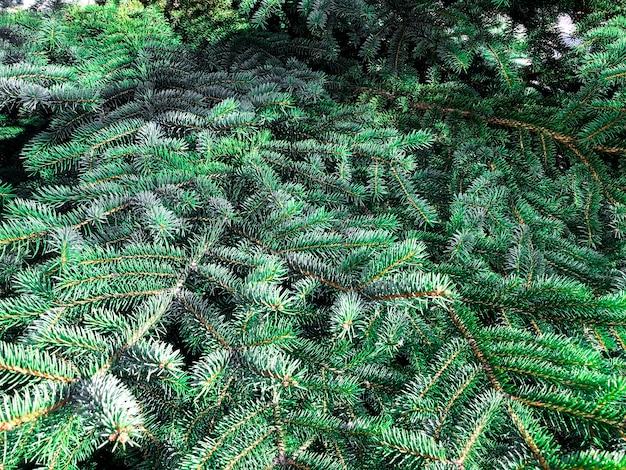 Oberfläche, textur der grünen nadelzweige. foto Premium Fotos