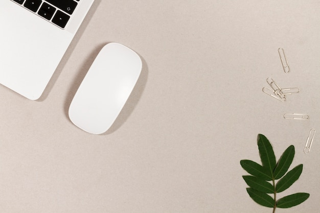 Office-gadgets mit zweig und clips Kostenlose Fotos