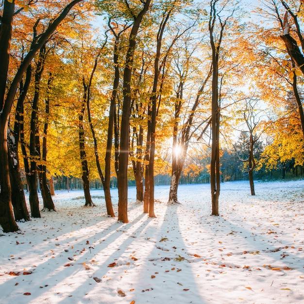 Oktober bergbuchenwald mit erstem winter Premium Fotos