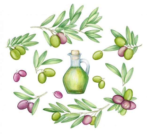Olive gesetzt. mit olivenzweigen und früchten für die italienische küche. aquarell. Premium Fotos