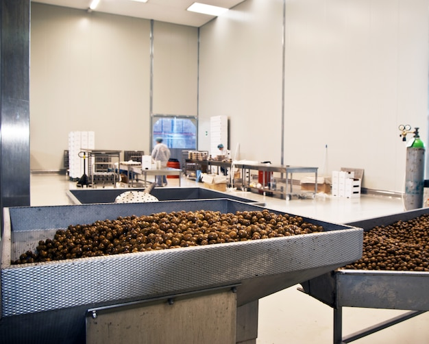 Oliven in einer verarbeitungsmaschine Premium Fotos