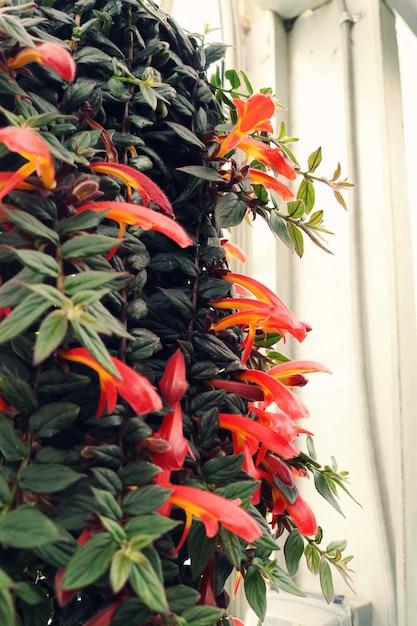 Orange blütenblatt blumen hängende pflanze nahaufnahme Kostenlose Fotos