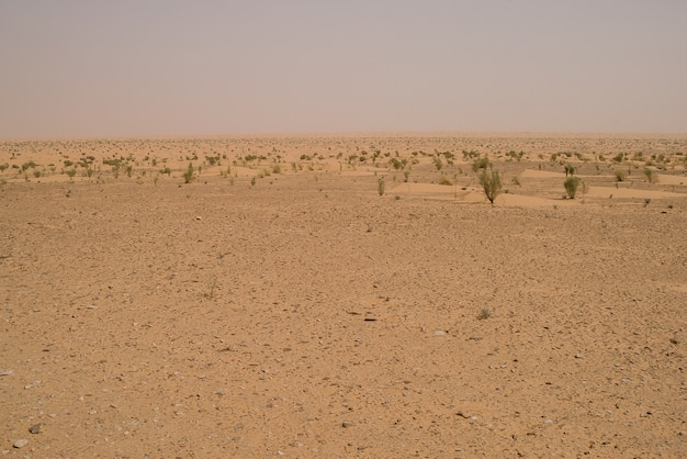 Orange sanddünen in der sahara-wüste Premium Fotos