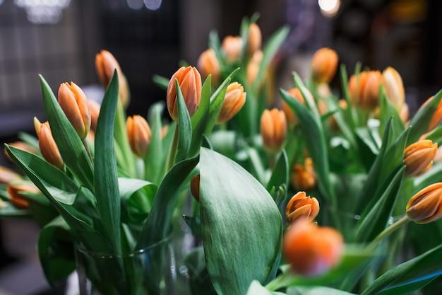 orange tulpen download der premium fotos. Black Bedroom Furniture Sets. Home Design Ideas
