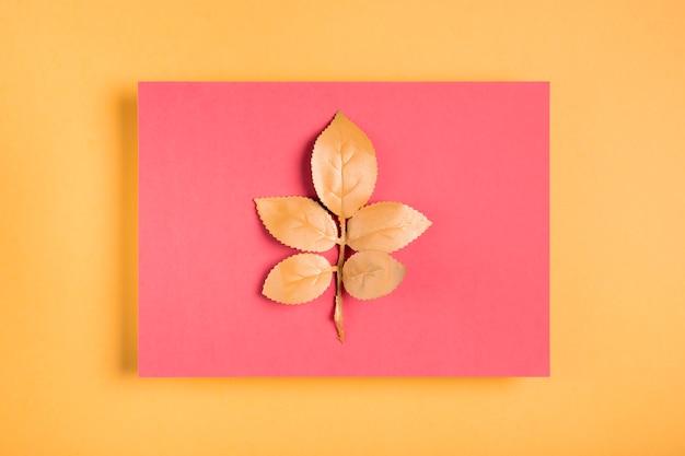 Orangenblätter auf rosa rechteck Kostenlose Fotos