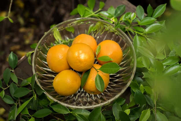 Orangengruppe frisch ausgewählt und abschnitt in einem korb Kostenlose Fotos