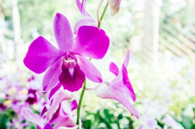 Orchidee Kostenlose Fotos