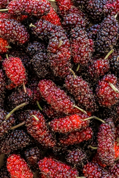 Organische maulbeerfrucht, schwarze reife und rote unausgereifte maulbeeren Premium Fotos
