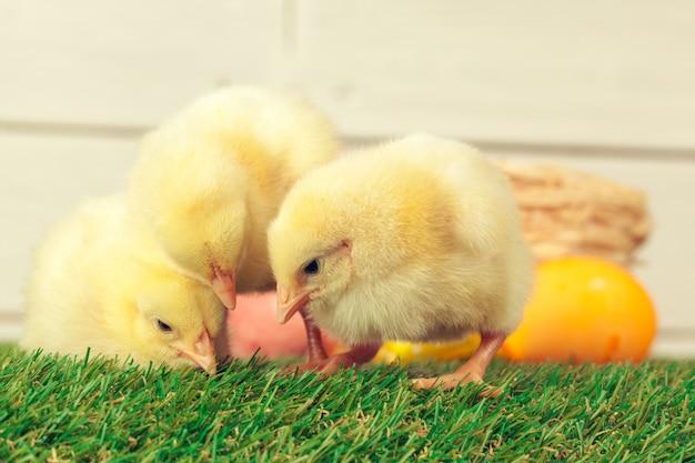 Ostereier und hühner auf grünem gras Premium Fotos