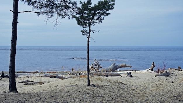 Ostseeküste Premium Fotos