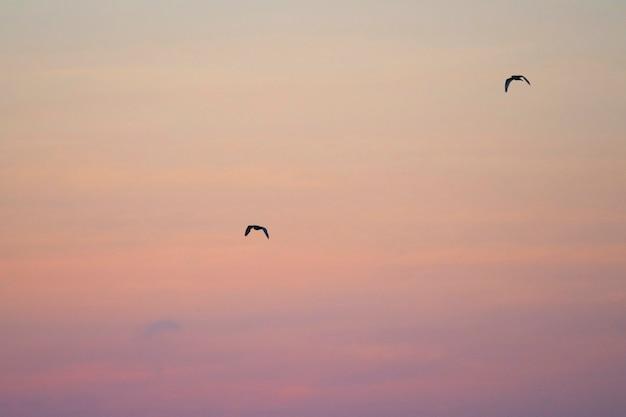 Paar fliegende galapagos-sturmvögel in einem rosa himmel der galapagos-inseln Kostenlose Fotos