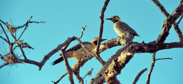Paar vogel campo flackern Premium Fotos