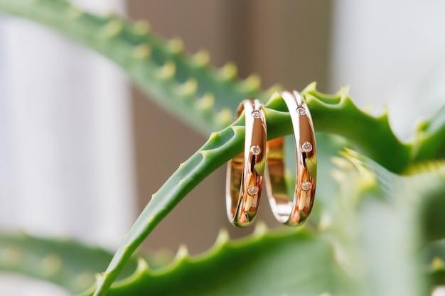 Paare der goldenen hochzeitsringe mit diamanten auf grünem stacheligem aloe vera-blatt. symbol für liebe und ehe. Premium Fotos