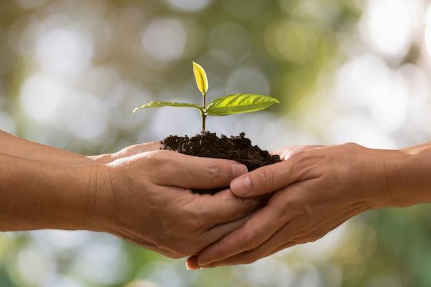 Paarhände, die zusammen grünpflanze auf bokeh hintergrund halten Premium Fotos