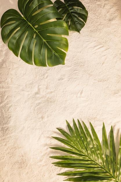 Palm und monstera blätter am gelben strand Kostenlose Fotos