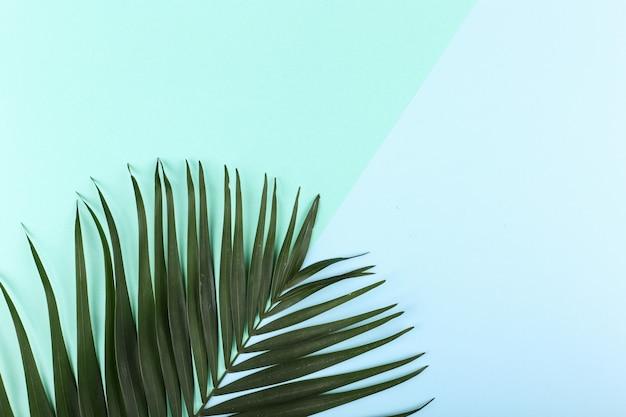 Palmblätter auf farbigem papier. sommerstimmung, tropisch, leer. Premium Fotos