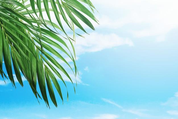 Palmblätter auf hintergrund des blauen himmels Premium Fotos
