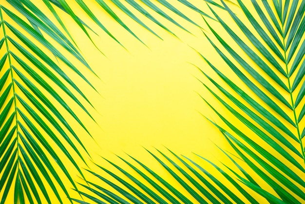 Palmblätter auf pastellfarbenem hintergrund Premium Fotos