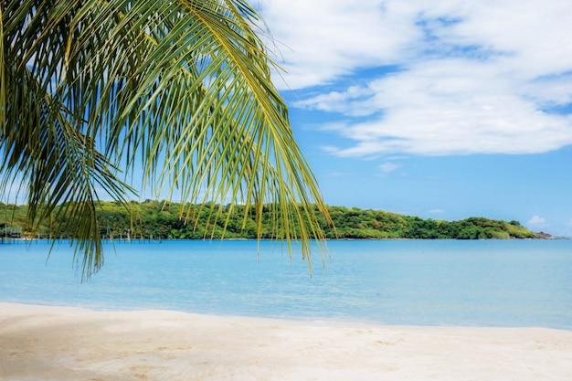 Palmblätter in meer. Premium Fotos