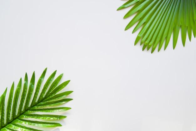 Palmblätter lokalisiert auf weißem hintergrund Kostenlose Fotos