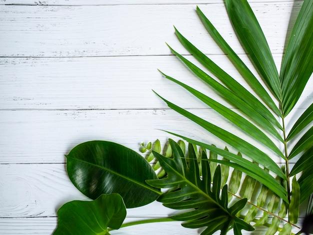 Palmblatt auf weißem holz tisch Premium Fotos