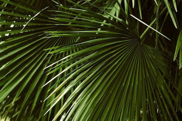 Palmblattmuster, abstraktes tropisches natürliches Premium Fotos