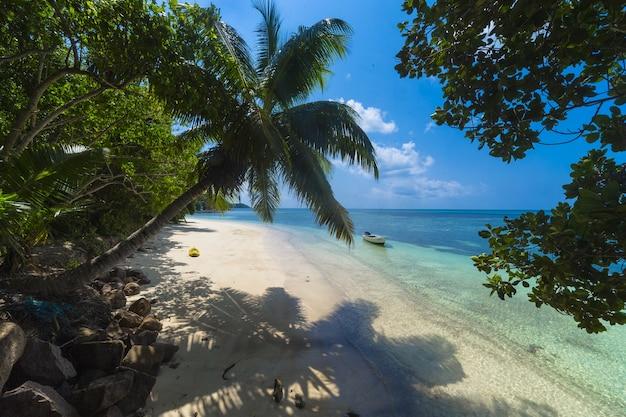Palme an einem strand, umgeben von grün und meer unter dem sonnenlicht in praslin auf den seychellen Kostenlose Fotos