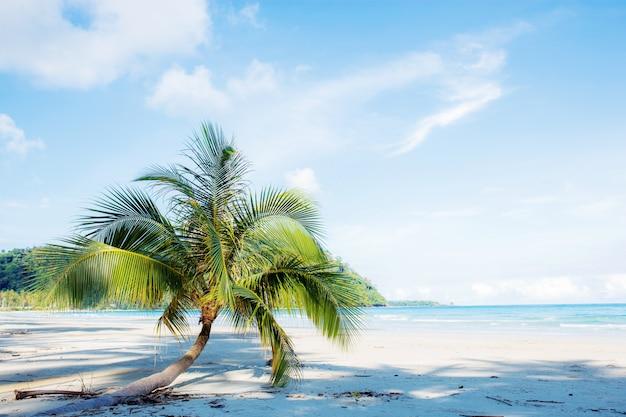 Palme auf sandstrand. Premium Fotos