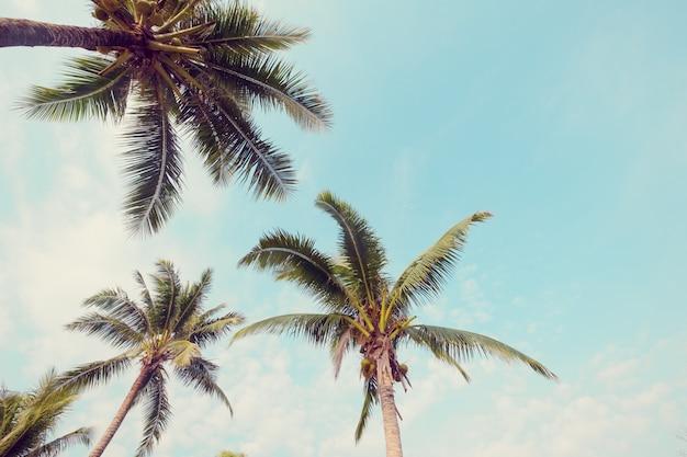 Palme auf tropischem strand mit blauem himmel und sonnenlicht im sommer Premium Fotos