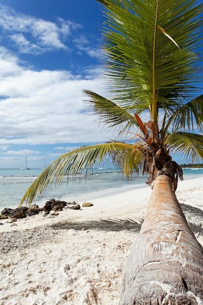 Palme im karibischen strand Kostenlose Fotos