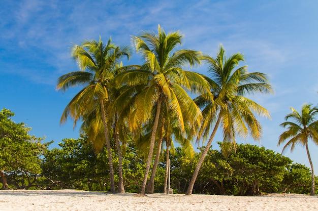 Palmen am strand landschaft Premium Fotos