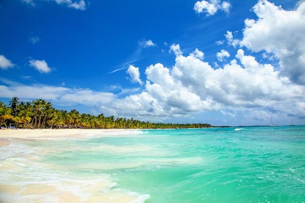 Palmen am tropischen strand Premium Fotos