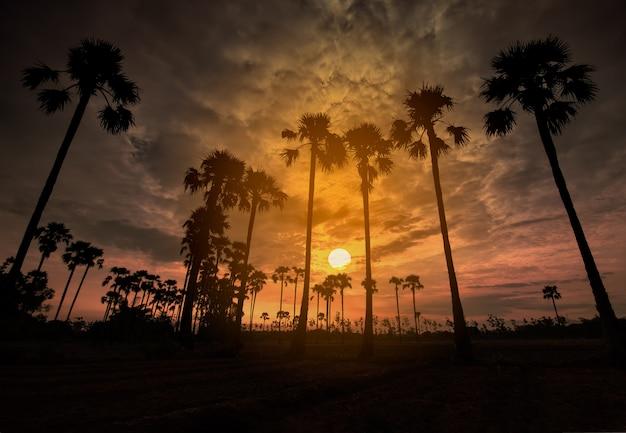 Palmen auf dem gebiet während einer frühen schönen dämmerung mit buntem himmel Premium Fotos