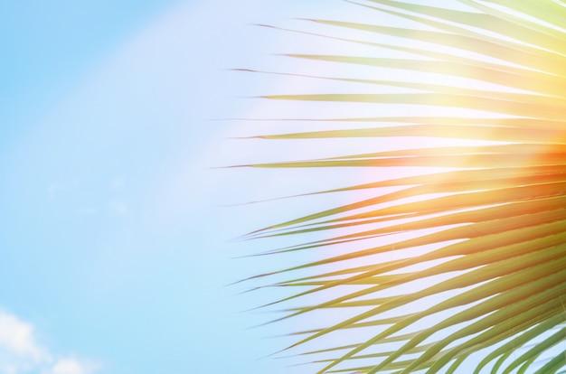 Palmen gegen blauen himmel Premium Fotos