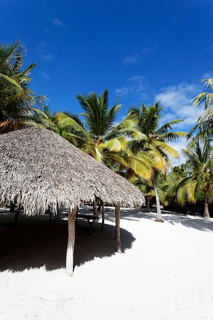 Palmen im karibischen strand Kostenlose Fotos