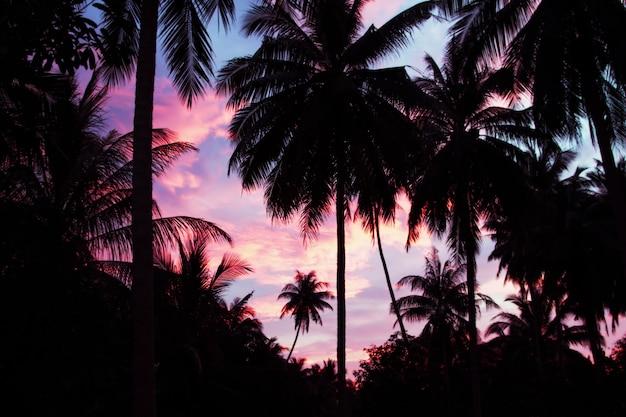 Palmen und himmel Premium Fotos