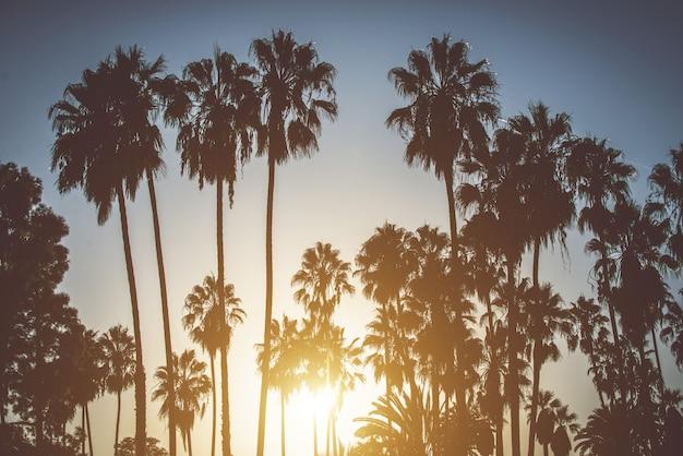 Palmen und kalifornischer sonnenuntergang Premium Fotos