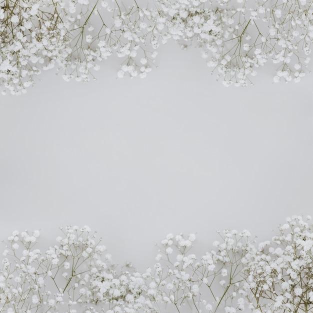 Paniculata blüht auf grauem hintergrund mit copyspace in der mitte Kostenlose Fotos