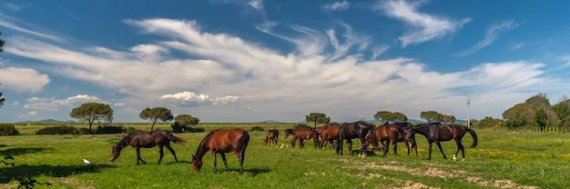 Panorama mit pferden, die auf einer grünen wiese grasen Kostenlose Fotos