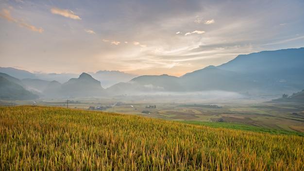 Panorama-reisfelder auf terassenförmig angelegtem im sonnenuntergang bei mu cang chai Premium Fotos