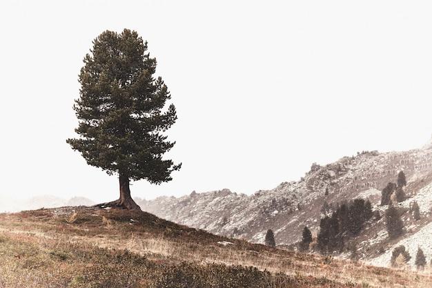 Panoramablick auf den berg Kostenlose Fotos