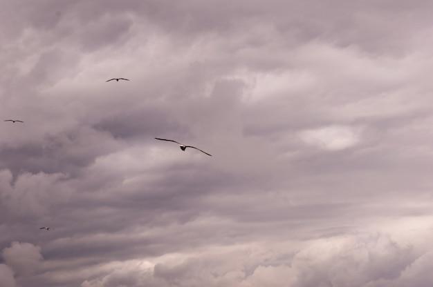 Panoramablick einer gruppe seemöwen, die gegen eine stürmische himmellandschaft fliegen. Premium Fotos