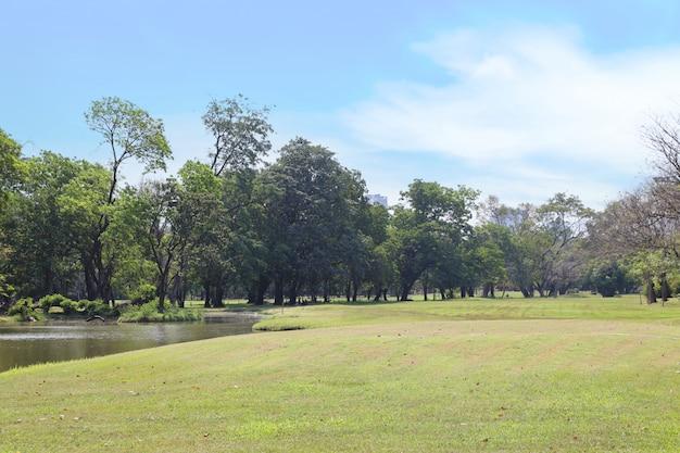 Park im freien mit blauem himmel und grünen bäumen Premium Fotos