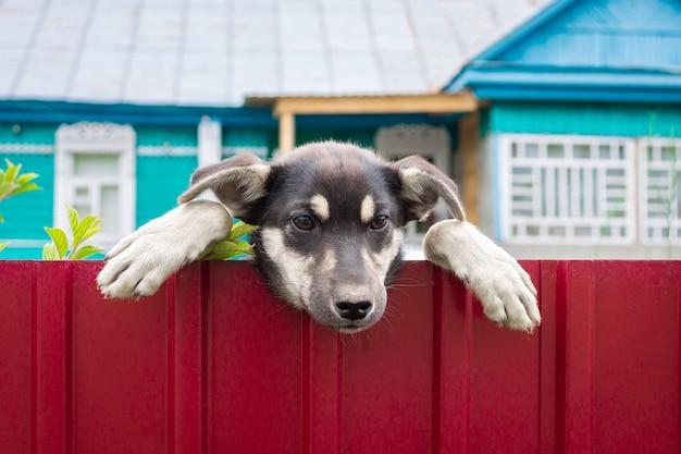 Pass auf den bösen hund auf Premium Fotos