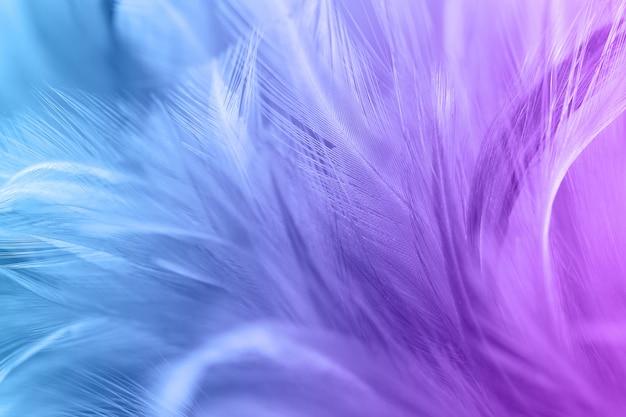 Pastell gefärbt von hühnerfedern in der weichen und unschärfeart für den hintergrund Premium Fotos