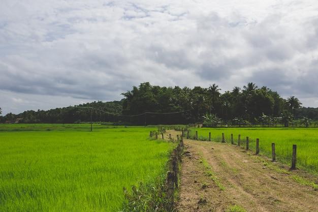 Pathway obwohl ein grünes feld Kostenlose Fotos