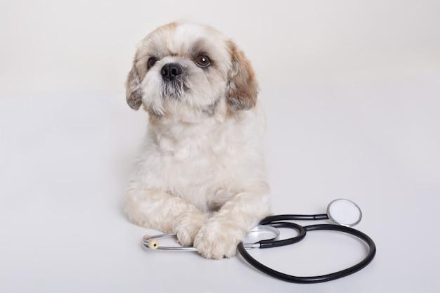 Pekingese hund mit stethoskop isoliert Kostenlose Fotos