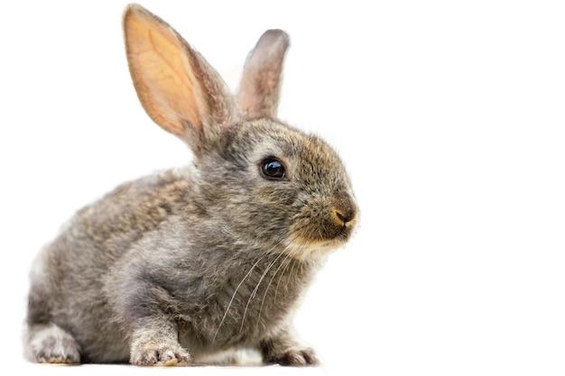 Pelziges niedliches kaninchen lokalisiert Kostenlose Fotos